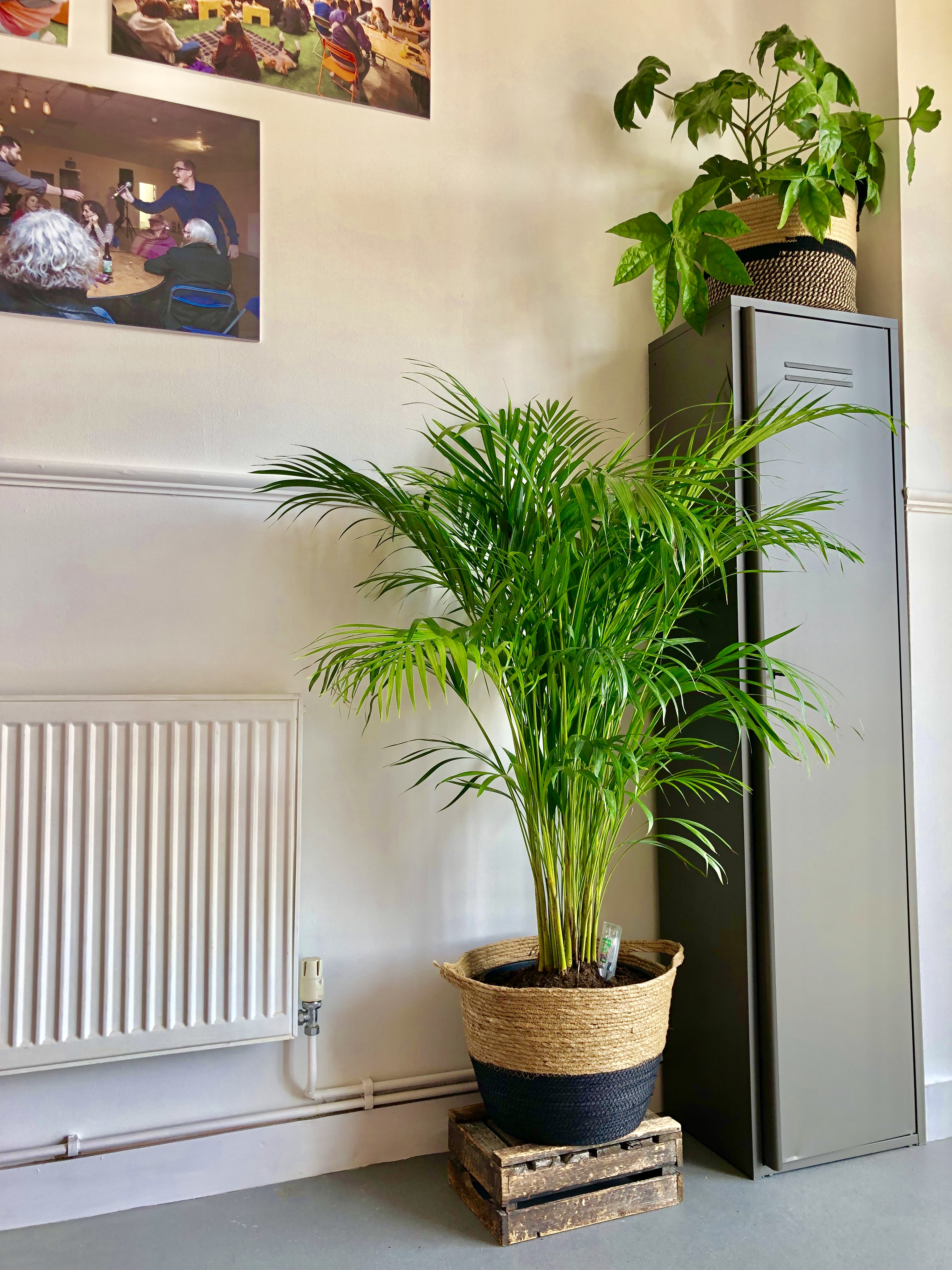 On The Benefits Of Office Plants Urban Foundry Creative Regeneration Agency